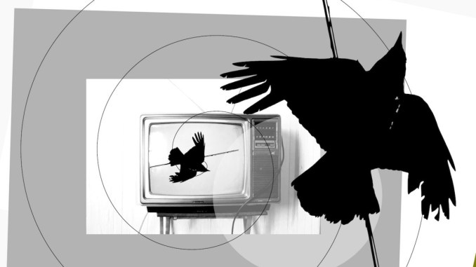 Dogs Versus Shadows – This Crow Wears A Wire