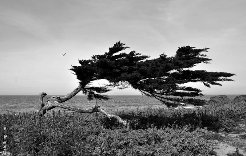 arbre_dumet