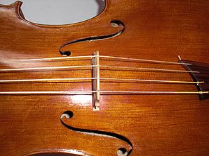 A cello strung with gut strings. Note the abse...