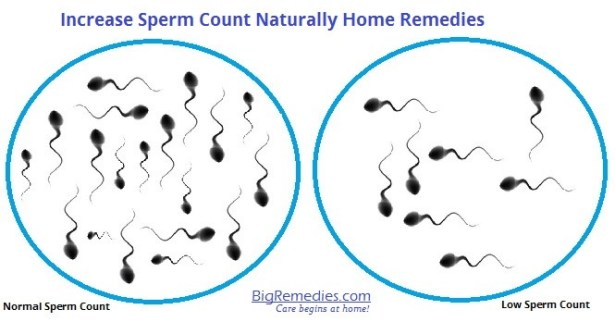Increase Sperm Count Naturally Home Remedies-BigRemedies