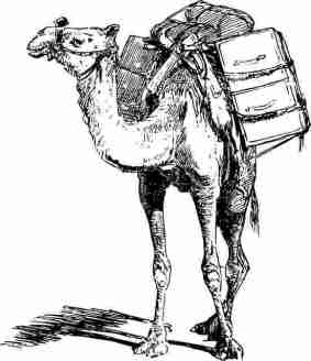 Camel-oont-300816-#yaALLAHpictures