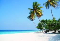 Plage de sable blanc, mer turquoise et cocotiers
