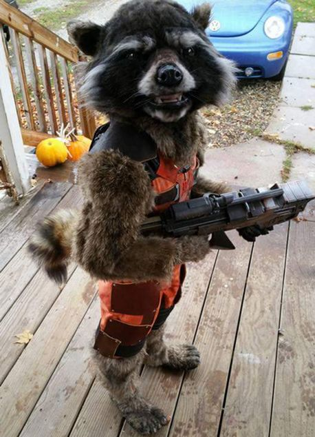 Halloween Costume1
