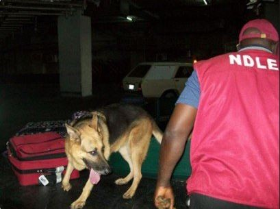 NDLEA raids clubs