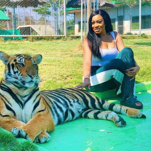 Actress Chika Ike poses with a huge tiger in Thailand