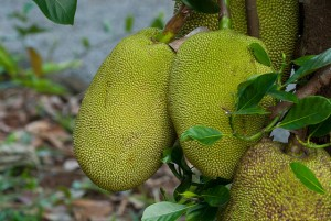 Top 10 Health Benefits of Jackfruit
