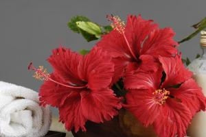 Two Best Hibiscus hair mask recipe for silky hair