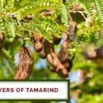 Healing Powers Of Tamarind