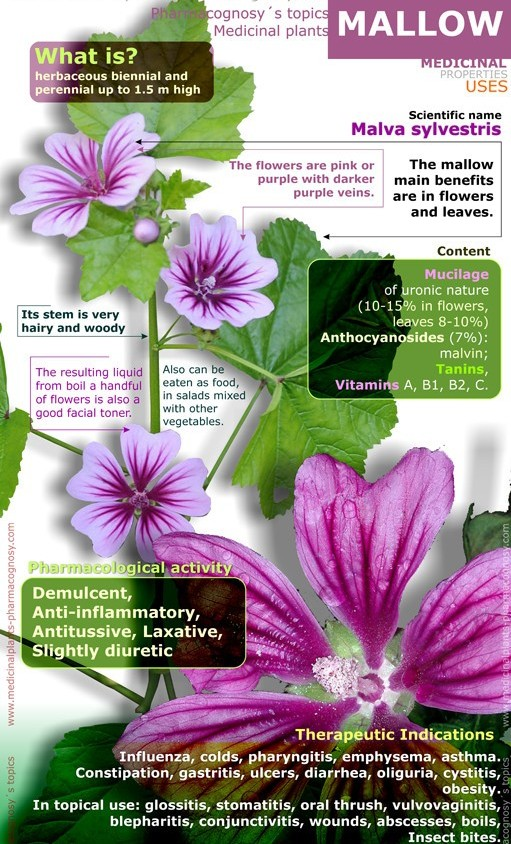 Benefits Of Mallow For Skin, Hair And Health