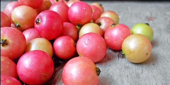 Health benefits of Kerson fruit