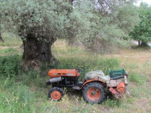 Lovely old tractor