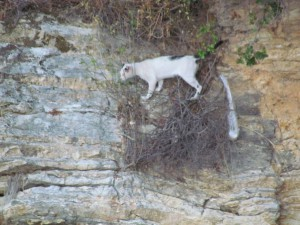 The white panther of Abelike. Maybe why we weren't visited by rats