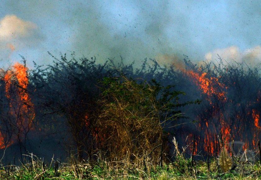 https://i1.wp.com/www.yadiraescobar.com/blog/wp-content/uploads/marabu_cuba_incendio_subversion_cambio_regimen.jpg