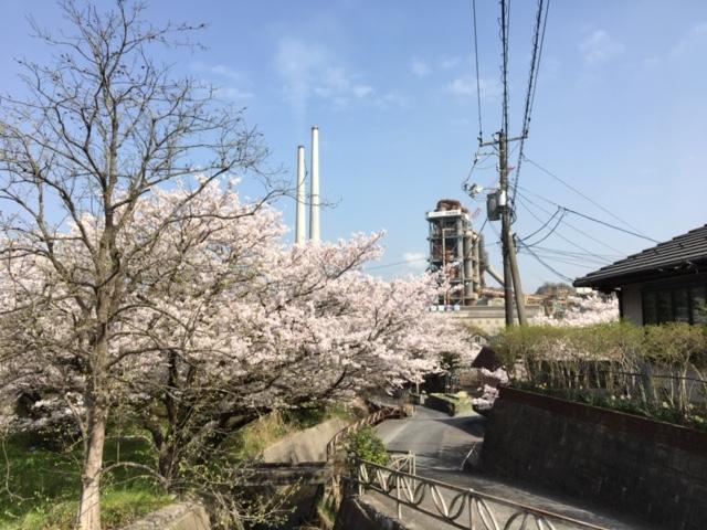やどまる美祢/やどまる美祢の近くの桜