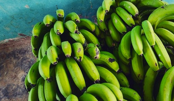 Bananas in Bolivia