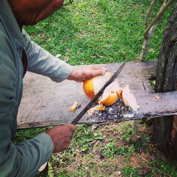 Opening a Coconut in Bolivia