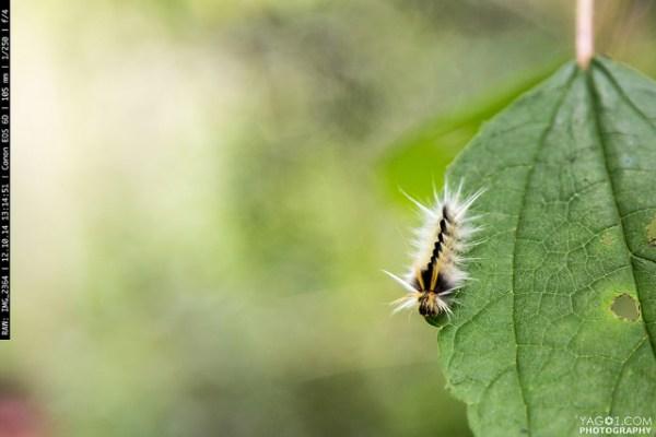 Amazon Animal Insect