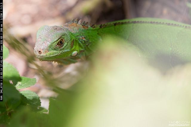 Amazon Jungle Animals