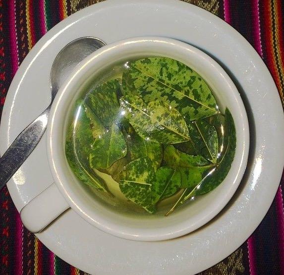 Coca Tea Bolivia