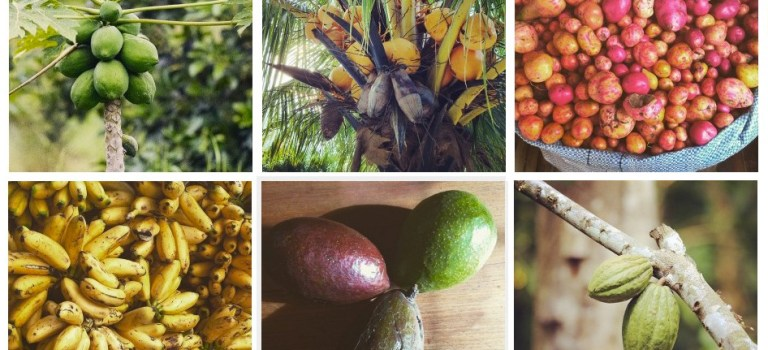 Healthy Tropical Fruits and Vegetables