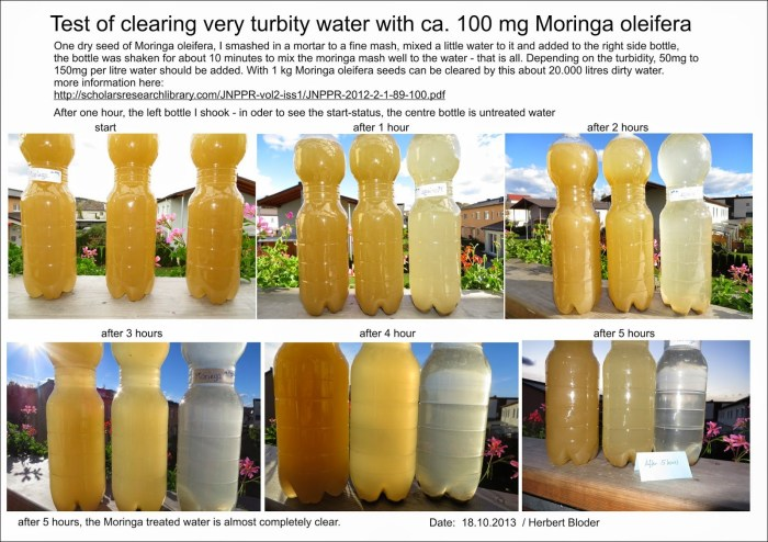 Water clearing with Moringa