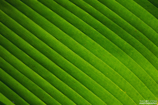 desktop Wallpaper green leaf