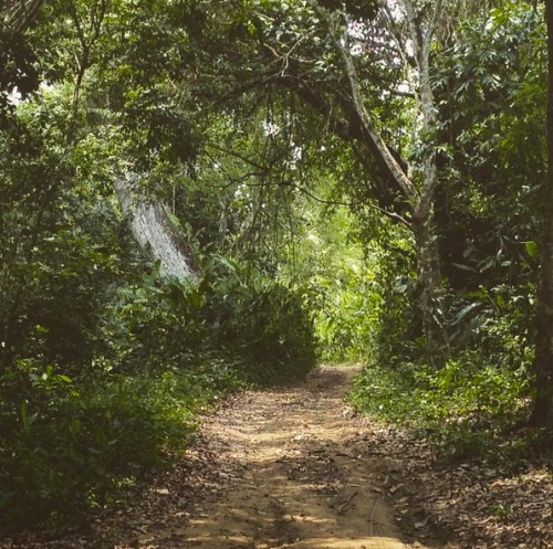 Paso del Mango Colombia
