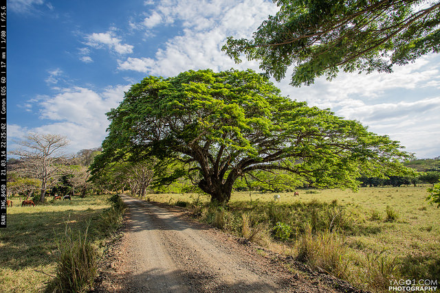 Tree of life - PermaTree 15822600671_e58bd03684_z