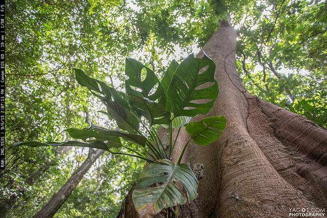 Tree of life - PermaTree 21471902058_4dd3fa8d15_z