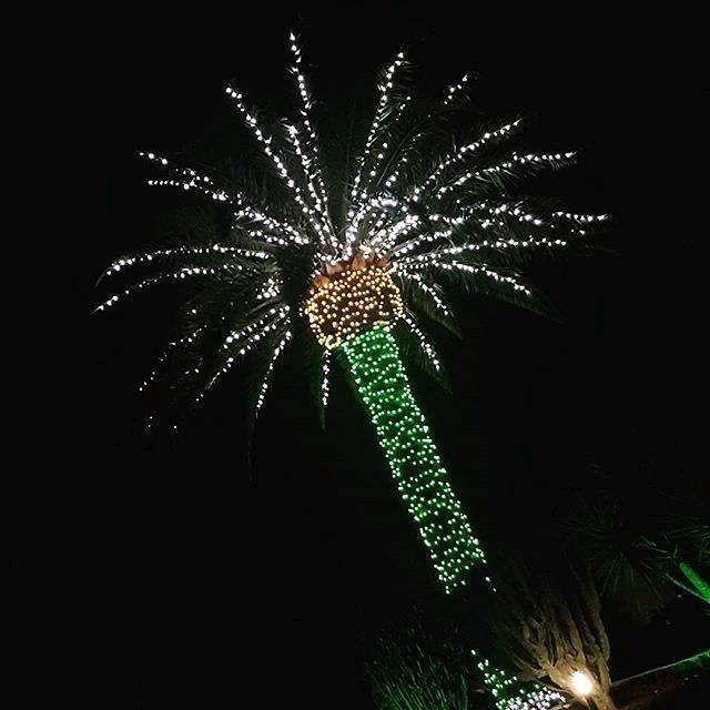 As son nuestros rboles de navidadYaizaturismo Lanzarote Regram  liss305