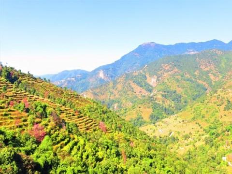 Népal Trek de Helambu Gul Bhanjyang