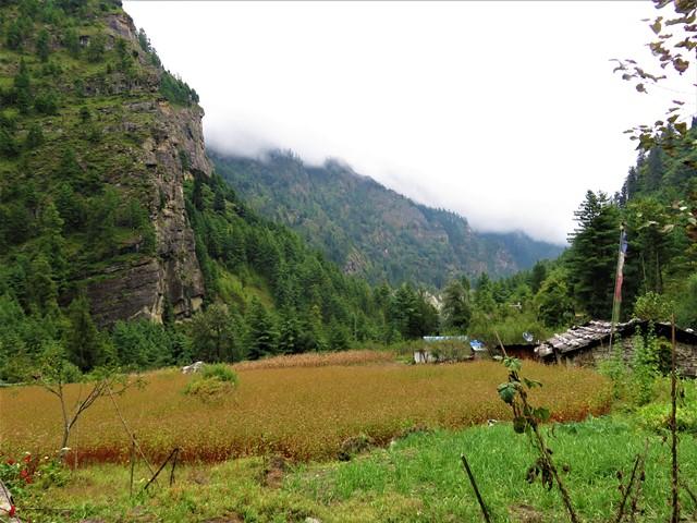 Népal Trek Circuit des Annapurnas Syange