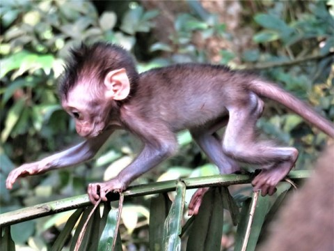 Bali Ubud Monkey Forest