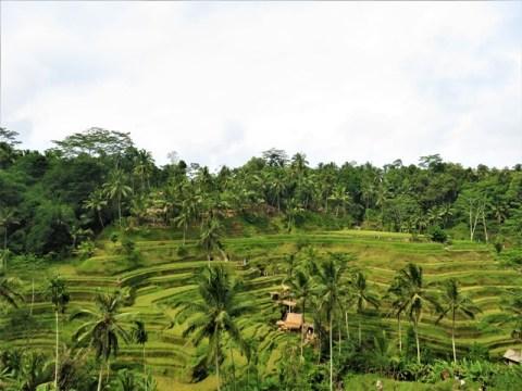 Bali Ubud rizières tegallalang