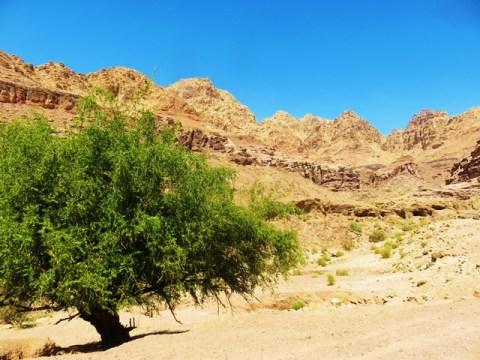 Jordanie vallée de dana