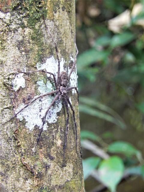 Pérou Amazonie araignée