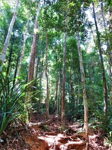 Malaisie Taman Negara