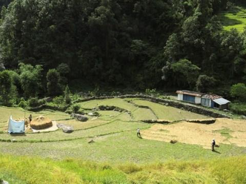 Népal Trek Circuit des Annapurnas Naya Pul