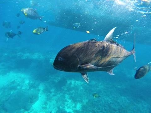 Nusa Penida thons snorkeling