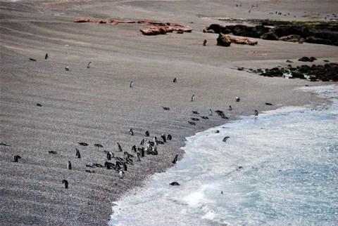 Argentine Péninsule Valdès manchots Punta Tombo