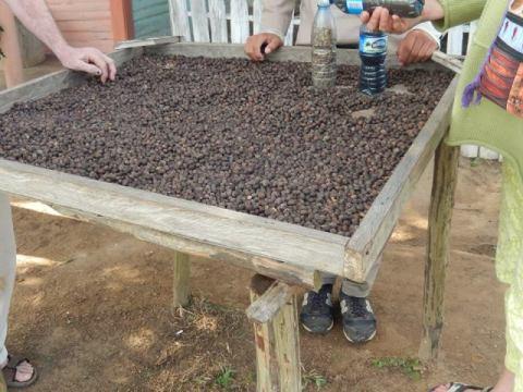 Cuba Vinales valle del silencio café