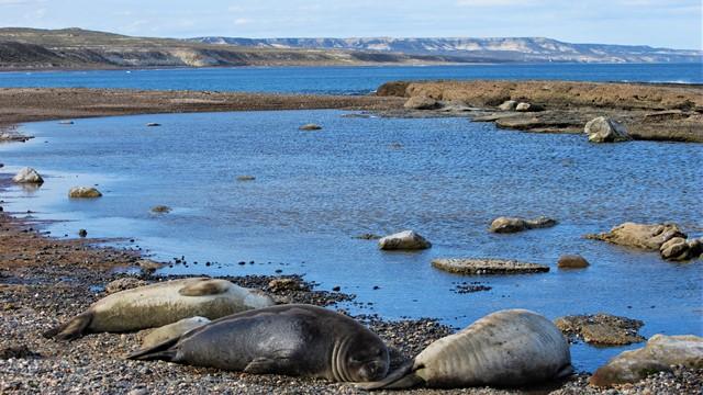 Argentine Péninsule Valdès éléphants de mer Punta Tombo