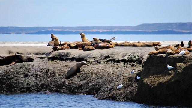 Argentine Péninsule Valdès lions de mer