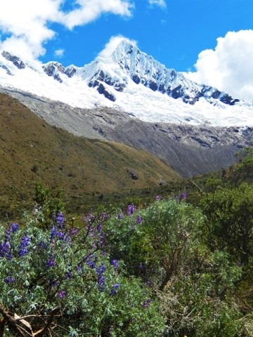 Pérou Cordillère blanche trek Santa Cruz Alpamayo