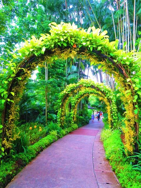 Singapour Jardin Botanique