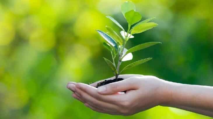 موضوع تعبير عن المحافظة على البيئة بالعناصر
