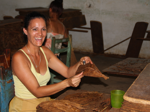 cigar making in Vinales