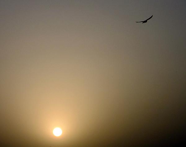 a falconry demonstration at Al Maha Desert Resort
