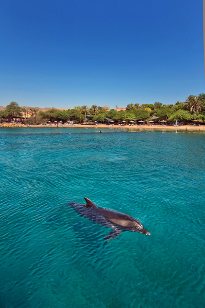 Eilat, Israel - photo by Dafna Tal, courtesy of Israel Ministry of Tourism