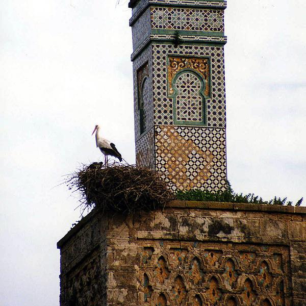 stork & nest, Morocco